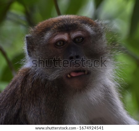 Surprised macaque monkey in the jungle looking at the camera #1674924541
