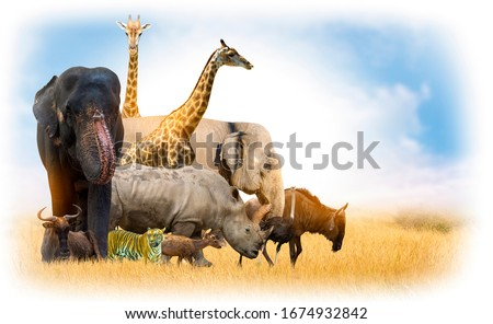 Wildlife Conservation Day Wild animals to the home. Or wildlife protection #1674932842
