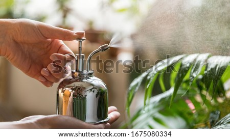 Close up of woman florist spraying houseplant by vintage steel water sprayer at garden home/greenhouse, taking care of plants, daylight. Home gardening, love of houseplants, freelance Royalty-Free Stock Photo #1675080334