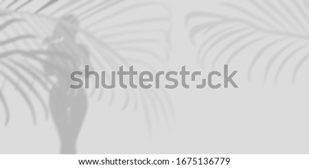 Palm leaves on the background of a female figure.Shadow #1675136779