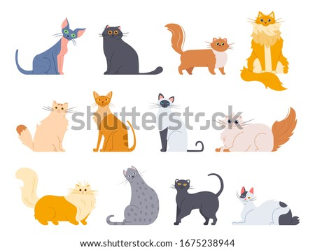 Cat breeds. Cute fluffy cats, maine coon, bobtail, siamese cat and funny sphynx cat, pedigree breeds pets isolated illustration icons set. Flat  kittens bundle