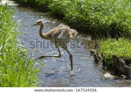 Crane #167524106