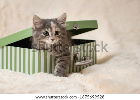 Cute gray kitten crawls out of a gift box in the form of a small suitcase