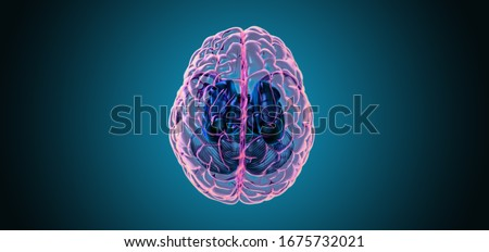 3D rendering illustration human brain with left and right cerebral top view transparent surface isolated on deep blue background included with clipping path
