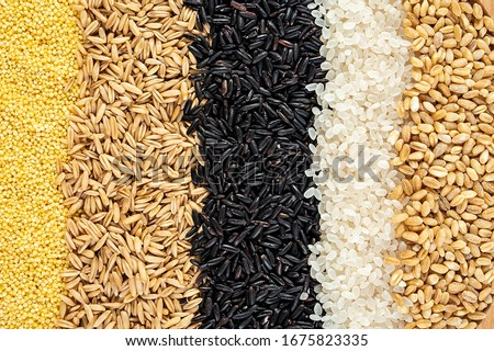 Autumn harvest of grain grain, full screen of whole grains	  #1675823335