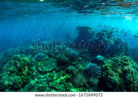 underwater scene with coral reef and fish; Sea in Surin Islands; Phang Nga Province; southern of Thailand. #1675849075