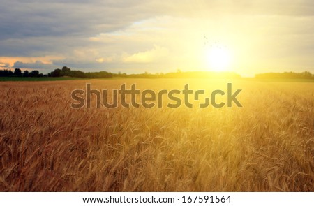 Beautiful farmland in sunset #167591564