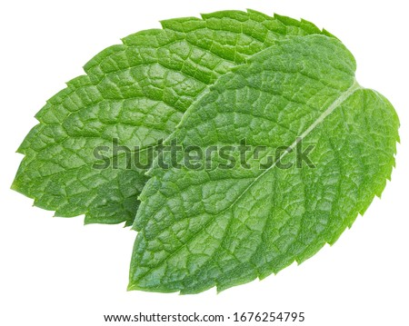 Spearmint or mint leaves on white background. Mint clipping path. Mint macro studio photo #1676254795
