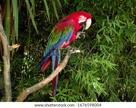 Red captive macaw in zoo #1676598004