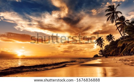 Sunset on the beach. Paradise beach. Tropical paradise, white sand, beach, palm trees and clear water. #1676836888