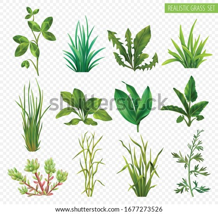Realistic grasses herbs succulents green plants set with clover dandelion chives plantain isolated transparent background vector illustration  #1677273526
