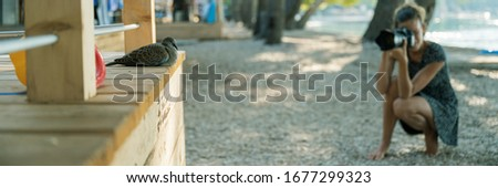 Wide view image of a young woman taking a picture of calm dove sleeping on wooden porch in a summer beach resort.
