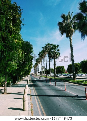 spring street with palms. nature and green #1677449473