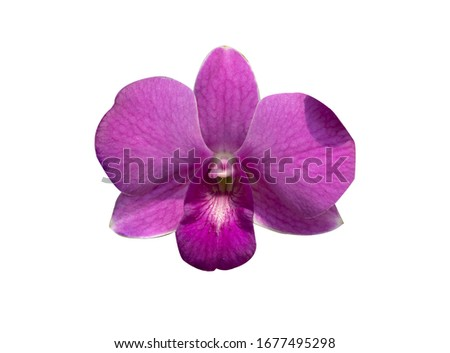 Beautiful orchid flower with isolated on white background and natural background.  Bouquet of purple, pink and white.