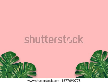 Monstera plant leaves,clipping path included.Flat lay, top view #1677690778