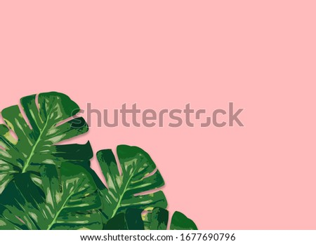 Monstera plant leaves,clipping path included.Flat lay, top view #1677690796