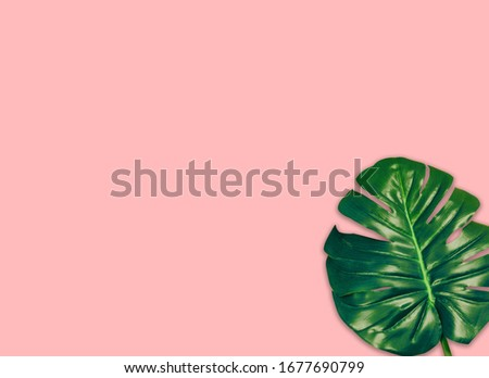 the tropical evergreen vine isolated on pink background.Flat lay #1677690799