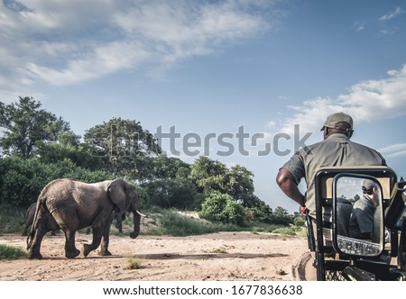 African elephants photographed on safari in Southern Africa Royalty-Free Stock Photo #1677836638