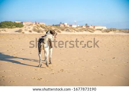 dog on seacoast walks in the sand #1677873190