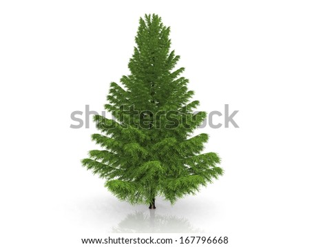 green fir on a white background #167796668
