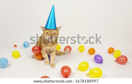 Red cat is looking at the camera. Pictures of cats, cat's eyes, cute cat, drawings of cats, drawings of cats. Russian cat with a headpiece on a white background. Baloon. Isolate copyspace. #1678188997