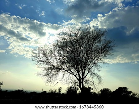 Open beautiful sky a tree and colorful atmosphere . A view of village road jangle forests and electric pools and wires seems. Sky blue white and sun trees are also in frame. A beautiful view #1678445860