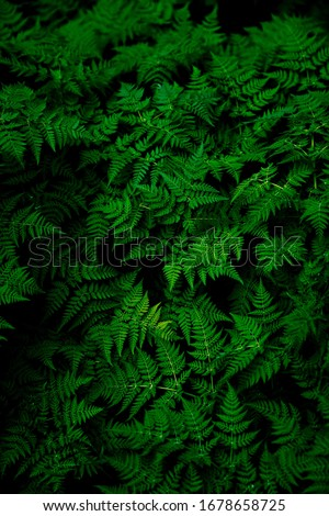 photo of green fern plant   #1678658725