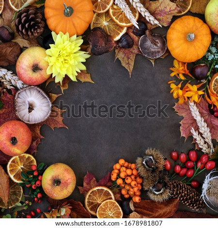 Autumn harvest festival background border with food, flora & fauna on lokta background. Top view, flat lay.   #1678981807