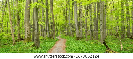 Hainich National Park, Germany, Winding Footpath through lush green  Beech Forest in Spring Royalty-Free Stock Photo #1679052124