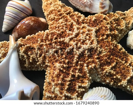A beautiful picture of a starfish near shells