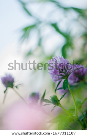 Texture of grass and purple flowers of clover.  #1679311189