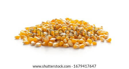 Heap of raw popcorn grains isolated on white background. Dry yellow corns seeds or sweetcorn kernels Royalty-Free Stock Photo #1679417647