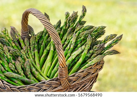 Asparagus. Fresh Asparagus. Pickled Green Asparagus. Bunches of green asparagus in basket, top view- Image #1679568490
