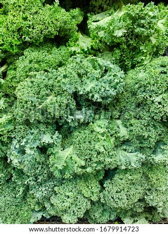 Kale leaves on the supermarket display with water droplets.