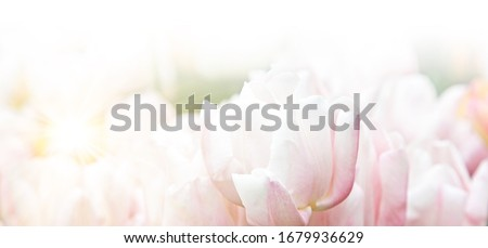 Spring and easter greeting card design layout #1679936629