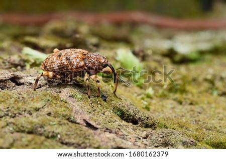 Weevil crawling on tree bark #1680162379