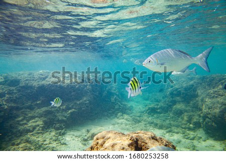 Beautiful colored fish swim underwater in the Indian Ocean among the stones. #1680253258