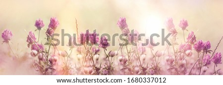 Red clover, flowering red, wild red flower in meadow #1680337012