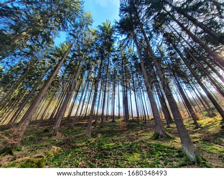 Beautiful spruce forest stock images. Nature background photo. Summer Forest in Czech Republic stock images