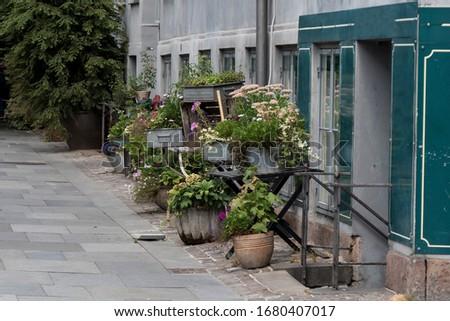 urban garden on the city #1680407017