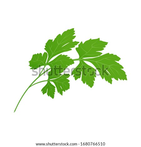 Fresh green parsley leaves on white background. Parsley isolated. Vector illustration. #1680766510