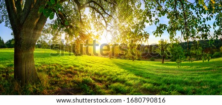Sunset view from under a tree on a green meadow with hills on the horizon Royalty-Free Stock Photo #1680790816