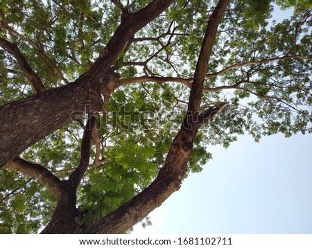 Tree under blue sky and cloud. Summer sky #1681102711