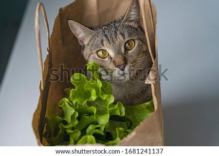 cute cat in a grocery bag
