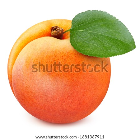 Apricot leaves isolated on white background. Apricot fruit clipping path. Fresh organic apricot #1681367911