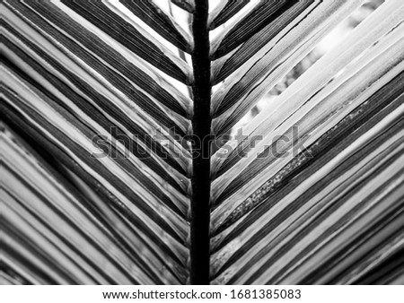 Plant at hortus, textured, black and white #1681385083
