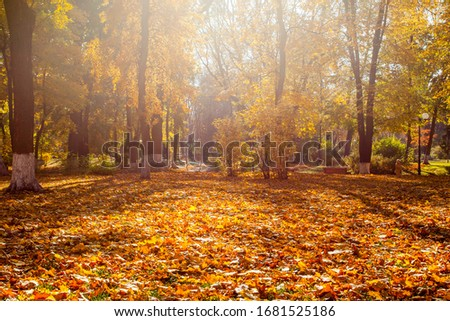 Beautiful autumn park with the yellow trees in sunny weather #1681525186