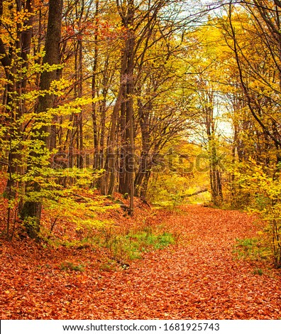 Pathway in the forest at autumn #1681925743