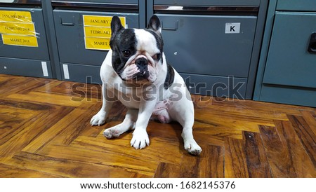 expression on the face of the dog that looks funny