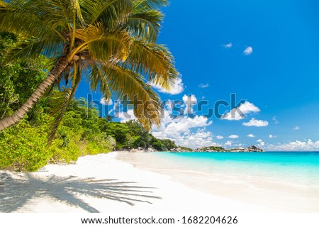 Touched tropical beach in similan island,Coconut tree or palm tree on the Beach. #1682204626